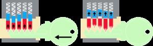 La bump key fa saltare in alto i pistoncini e i contropistoncini, allineandoli per una frazione di secondo