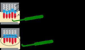 Nel lock picking ogni pistoncino viene allineato con il grimaldello.